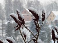 Smrzovka 2009